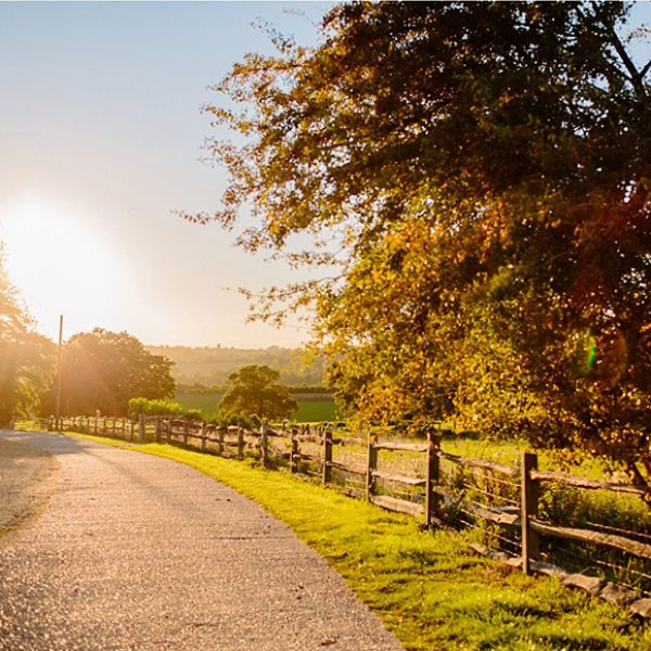 The beautiful driveway approach to Gaynes Park glimmering in the Autumn Sun
