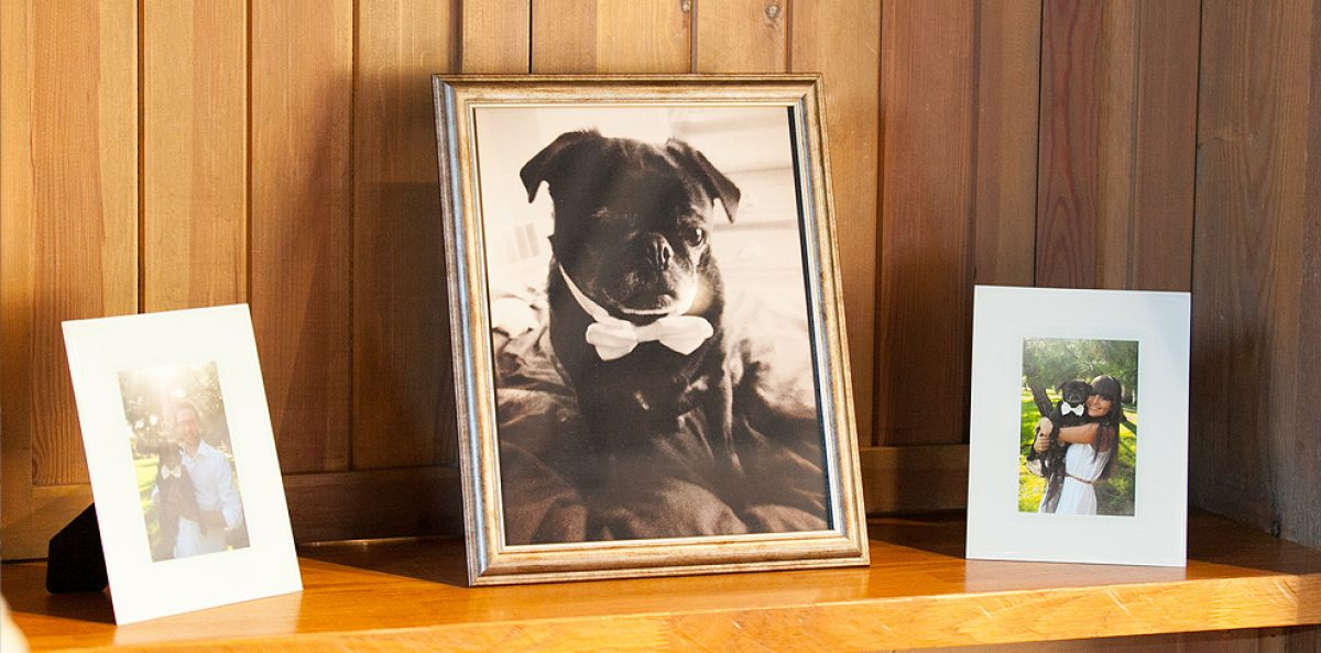 A pug wedding photo display at Gaynes Park