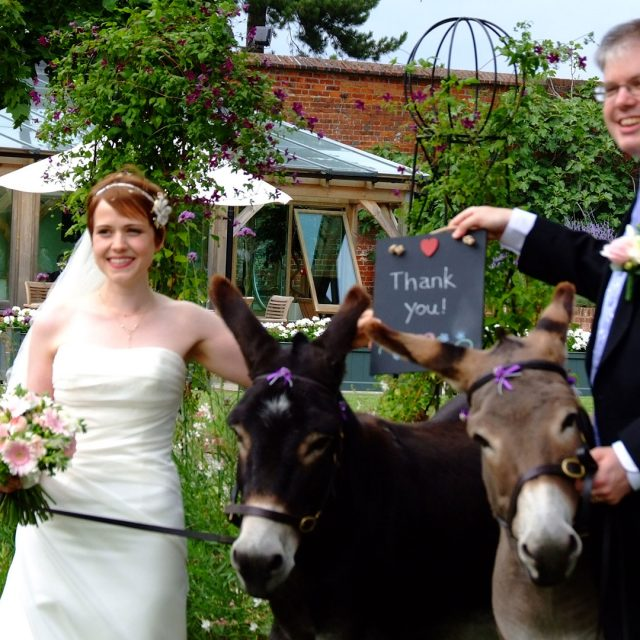 Bride and groom who are animal lovers with donkey